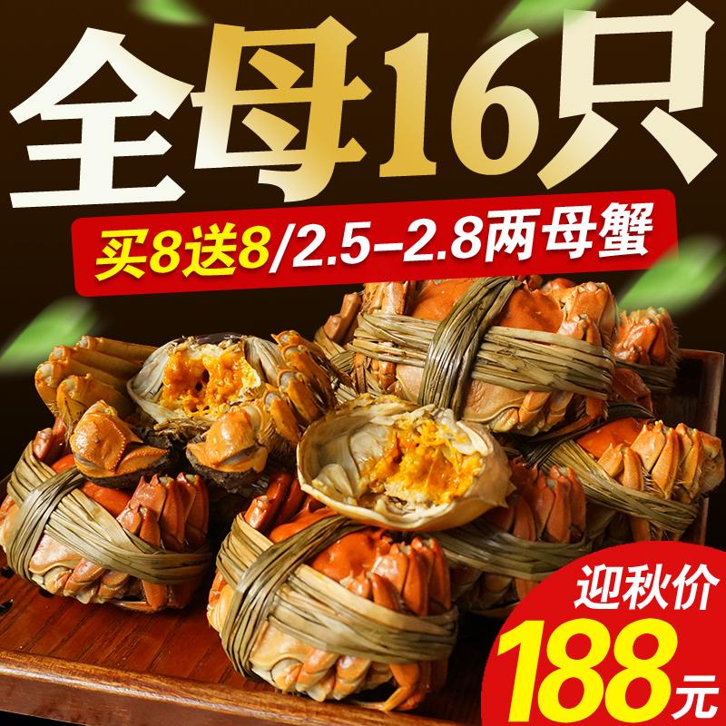 共16只 现货阳澄湖六月黄大闸蟹全母买8只送8只鲜活大螃蟹套餐