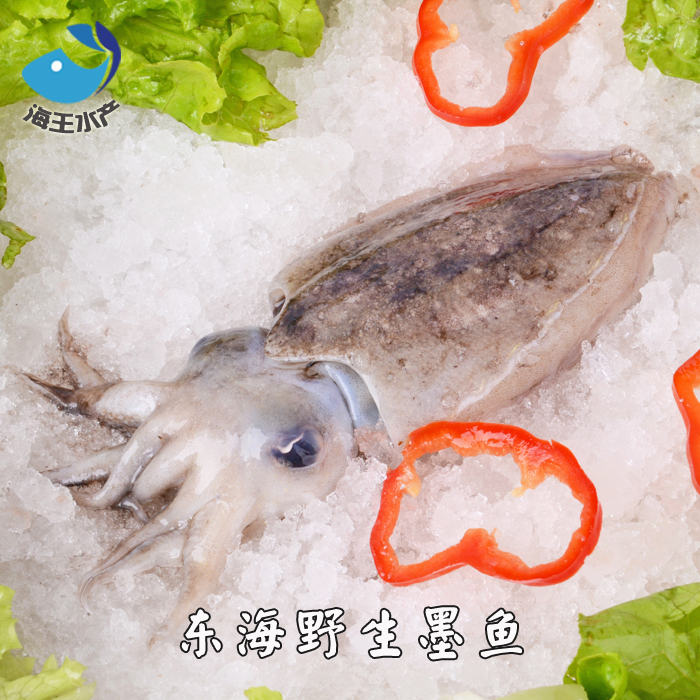 【海王水产】东海鲜活海鲜 墨鱼 目鱼 乌贼 深海鱼 约5-7两/只