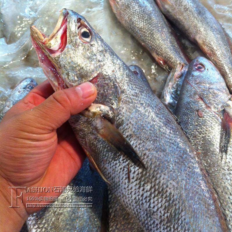 东海鲜活水产新鲜野生东海小鮸鱼 米鱼 小船捕捞一条一斤左右