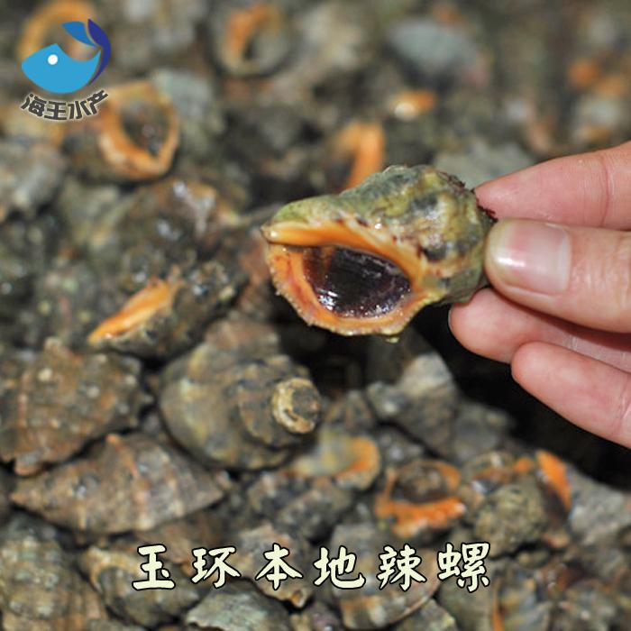 【海王水产】东海野生鲜活贝壳 辣螺 玉螺 海螺 微苦 回甘 好吃