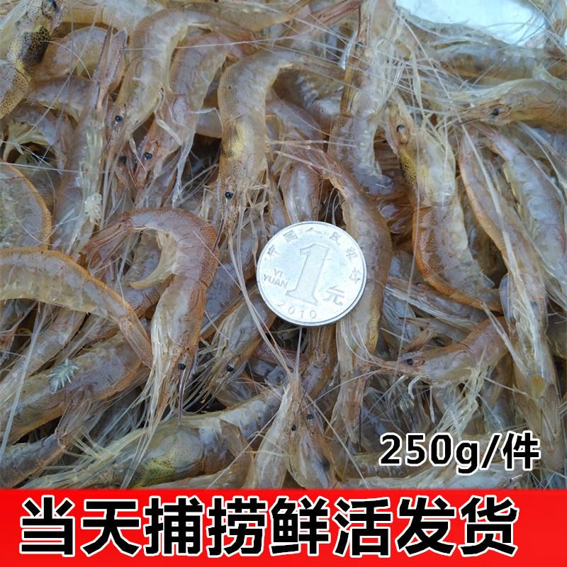 海鲜水产鲜活 小白虾鲜活青虾孕妇宝宝辅食白对虾,野生虾子250g