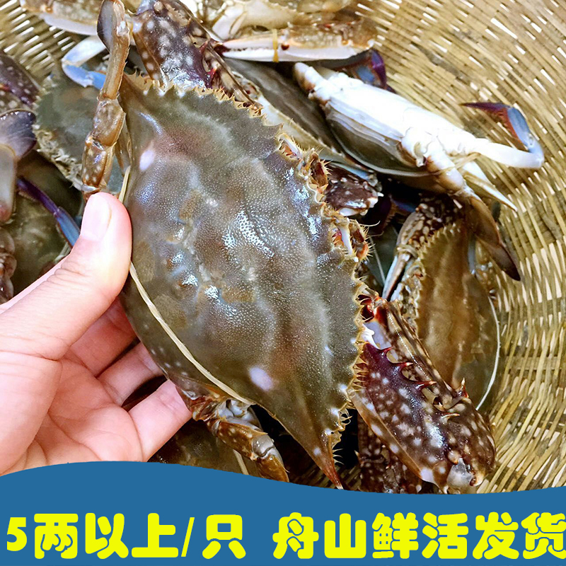 舟山野生梭子蟹鲜活海鲜白蟹海蟹螃蟹大公蟹5-7两/只,3斤起拍