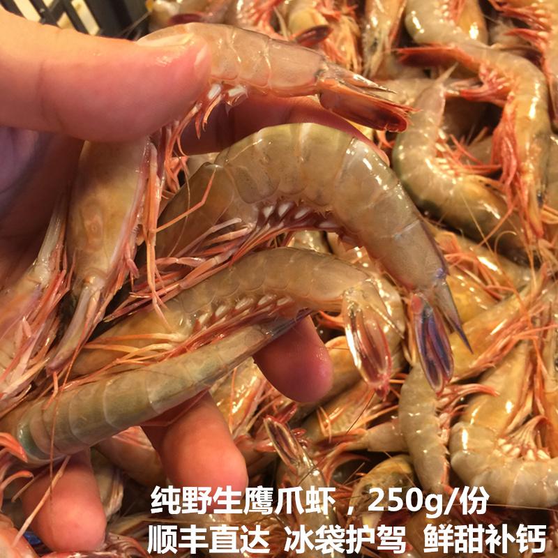 东海海虾鲜活新鲜滑皮虾厚皮虾鹰爪虾3斤免邮250g一份 海鲜水产